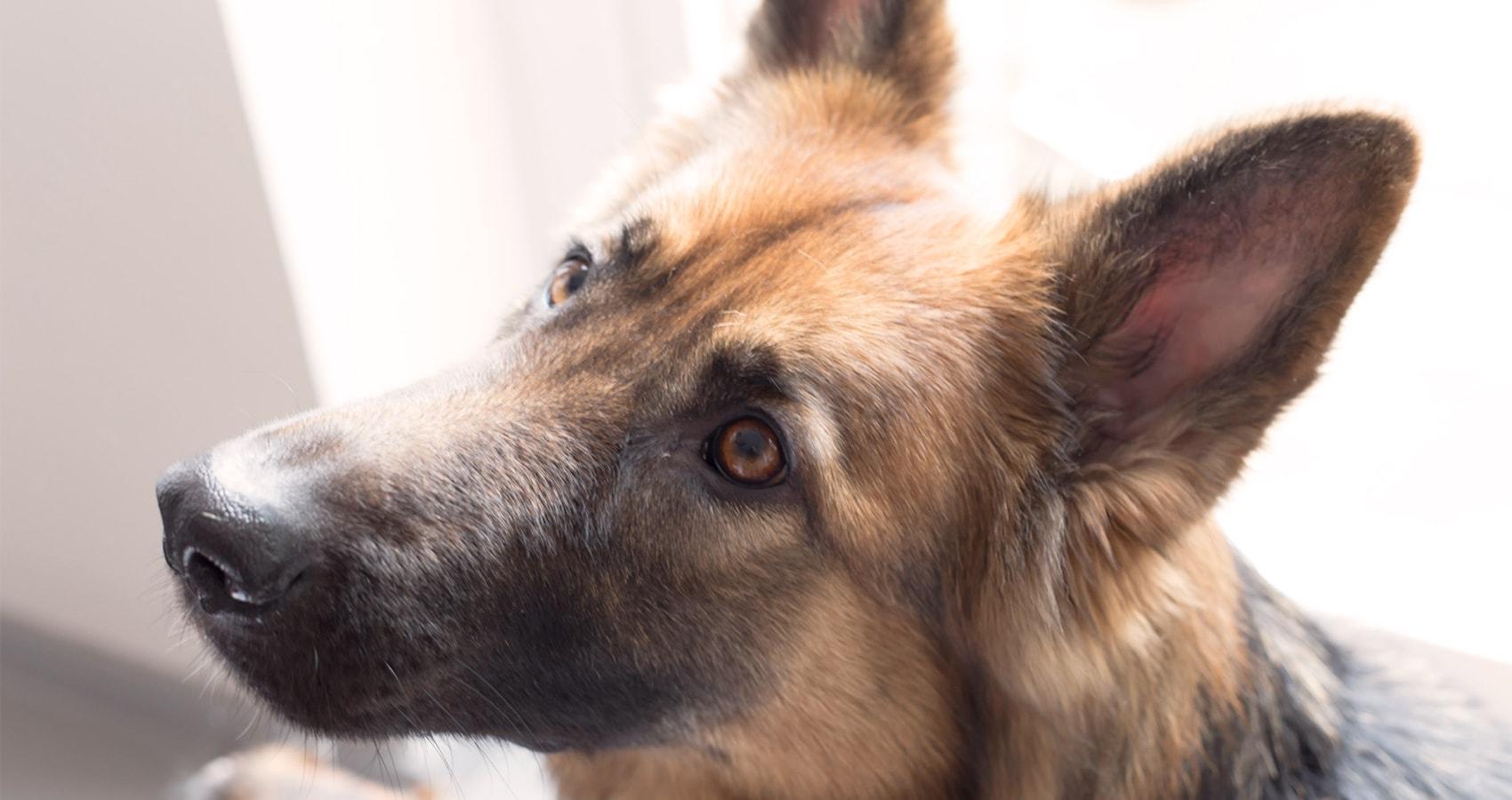 Tierpraxis Stadler - Kontakt